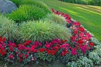What plants are low maintenance the home touches for Low maintenance plants for front of house